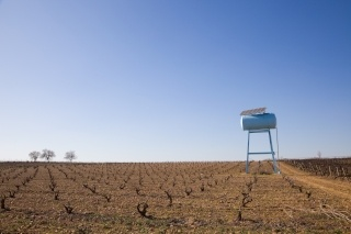 Dry Grape Field With Water Tank