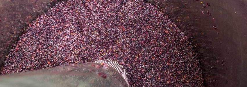 How-Wine-Gets-Its-Flavor